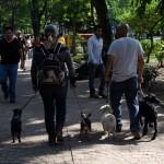 Perros_Condesa-6