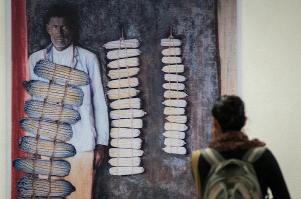 """MÉXICO, D.F., 29ENERO2015.- Inauguración de la exposición del pintor oaxaqueño Francisco Toledo, """"El maíz de nuestro sustento"""", en el metro Zapata, muestra que defiende el maíz nacional sobre el transgénico. Durante la inauguración se invito a la gente a juntar firmas y unirse a la campaña """"No al maíz transgénico"""" del artista plástico, en oposición al grano de maíz genéticamente modificado. FOTO: DIEGO SIMÓN SÁNCHEZ /CUARTOSCURO.COM"""