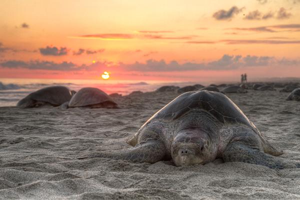 tortugas mazunte