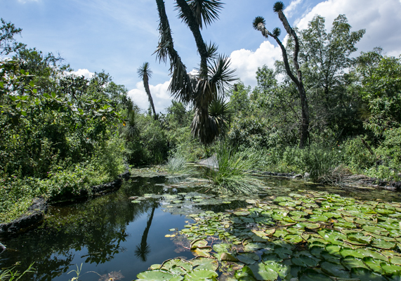 Fotogaler A I El Jard N Bot Nico De La Unam M Sporm S: jardin botanico de la unam