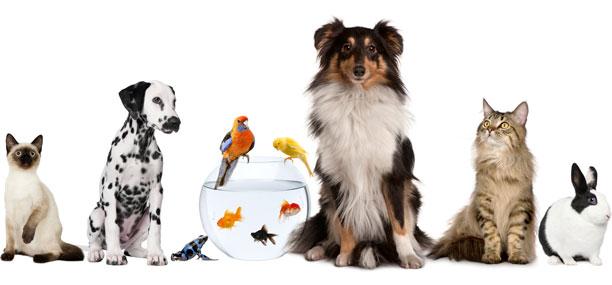 Znalezione obrazy dla zapytania zwierzaki domowe