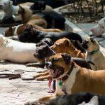 CIUDAD DE MÉXICO, 03OCTUBRE2016.- Colectivos de adiestramiento canino ofrecen clases de adiestramiento en las inmediaciones del Parque México, ubicado en la colonia condesa.  FOTO: GALO CAÑAS /CUARTOSCURO.COM