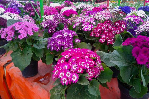 Flores y plantas las del mercado de nativitas m sporm s for Plantas precios viveros