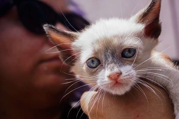perros, gatos y adopción