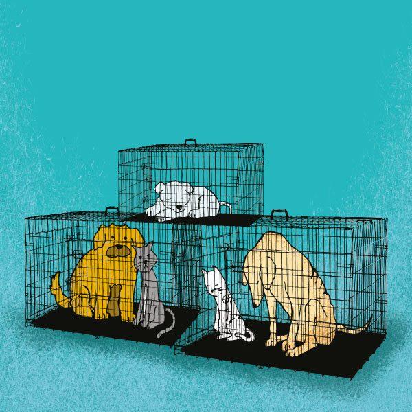 adopción fraudulenta de mascotas en la CMDX