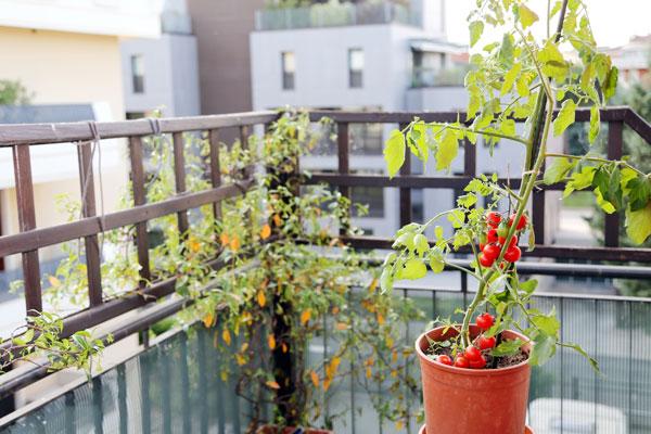 En Alas.Cultiva tu espacio hay talleres para que aprendas a hacer tu huerto urbano